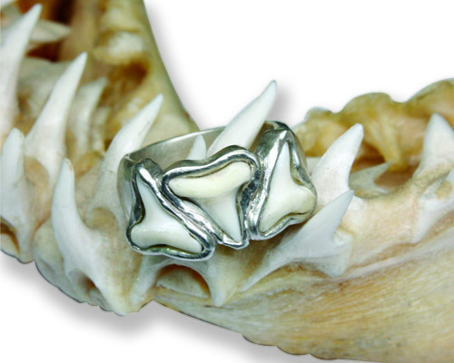 Shark Tooth Ring 1